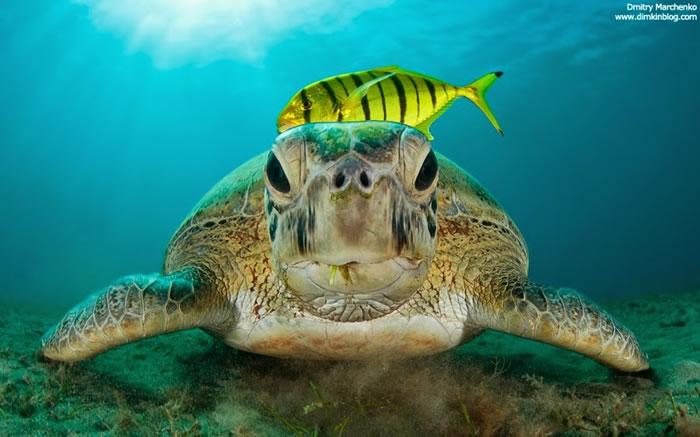 28 Amazing Pictures Of Sea Turtles 2