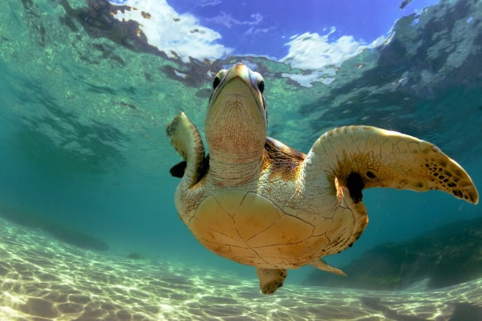 28 Amazing Pictures Of Turtles 22