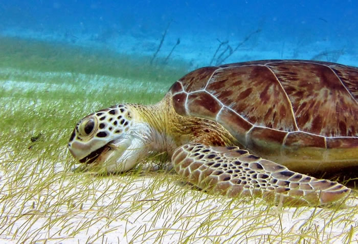 28 Amazing Pictures Of Turtles 23