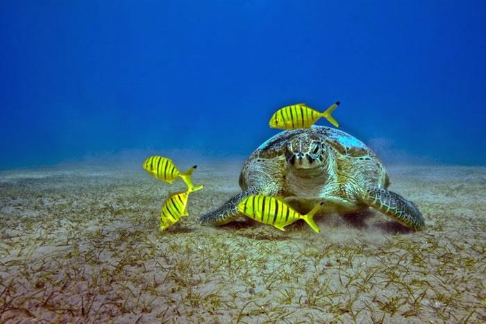 25 Amazing Pictures Of Sea Turtles