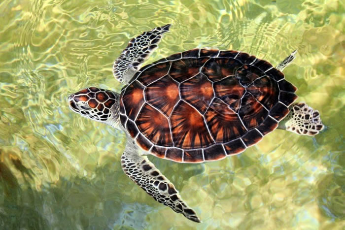 28 Amazing Pictures Of Turtles 25