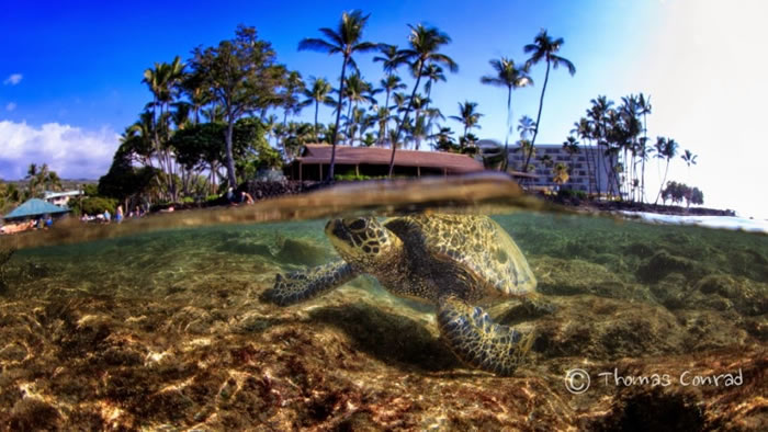 28 Amazing Pictures Of Turtles 3