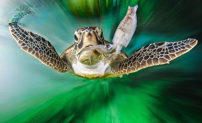 28 Amazing Pictures Of Turtles 4