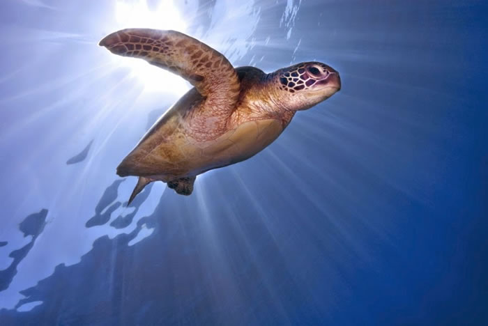 28 Amazing Pictures Of Turtles 5