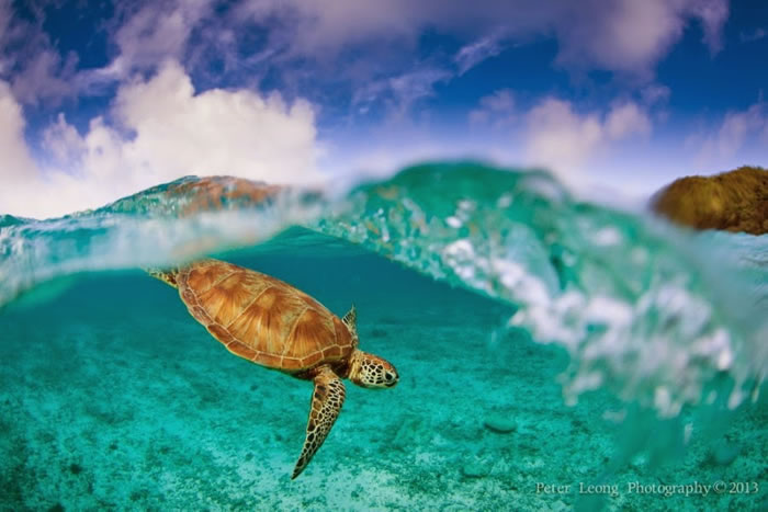 28 Amazing Pictures Of Sea Turtles 6