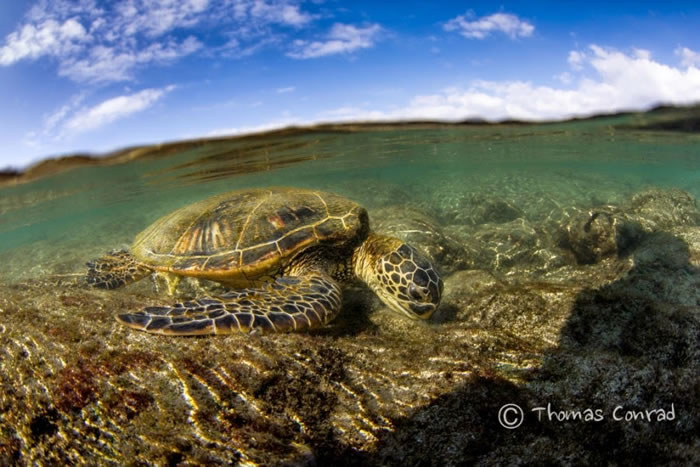 28 Amazing Pictures Of Turtles 7