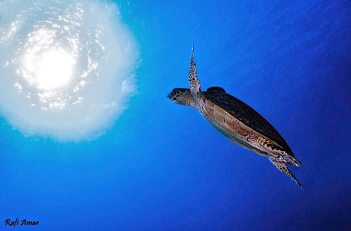28 Amazing Pictures Of Turtles 8