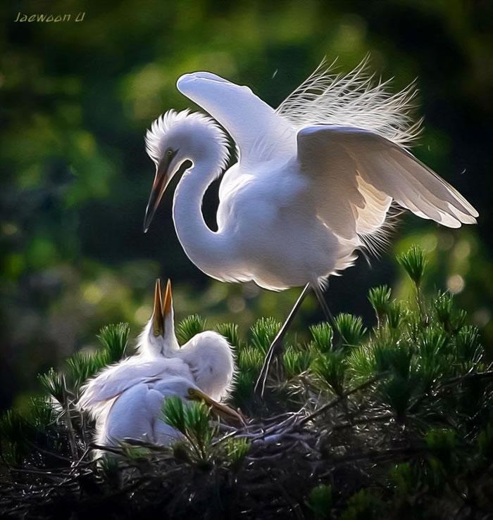 Amazing Photo Images Of Nature By Photographer Jaewoon U 12