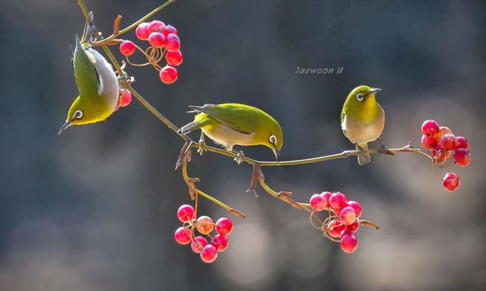 Spectacular Pictures Of Nature By Photographer Jaewoon U