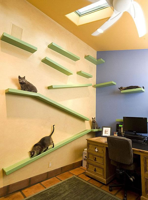Guy Turns Home Into Cat Paradise With $35k Of Pet Products 2