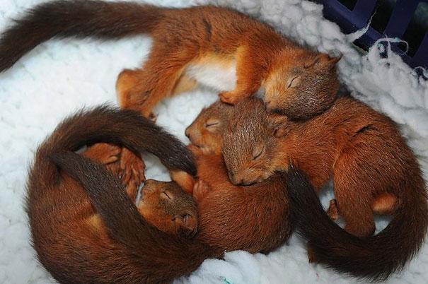 Pet Photos 30 Animals Using Each Other As Pillows (3)