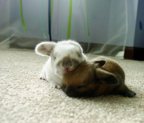 Pet Photos 30 Animals Using Each Other As Pillows (5)