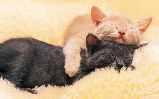 Pet Photos 30 Animals Using Each Other As Pillows (6)