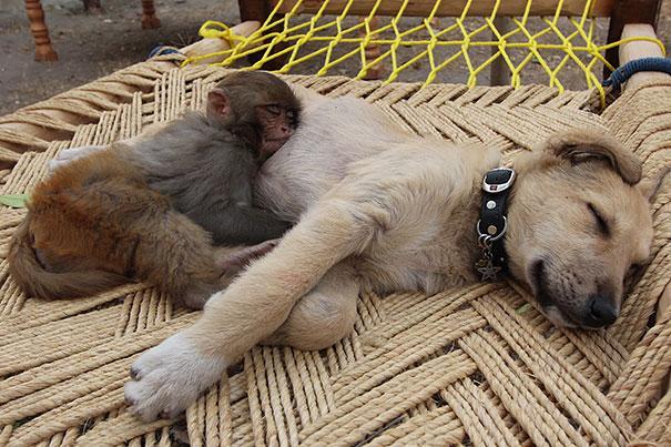 Pet Photos 30 Animals Using Each Other As Pillows (7)