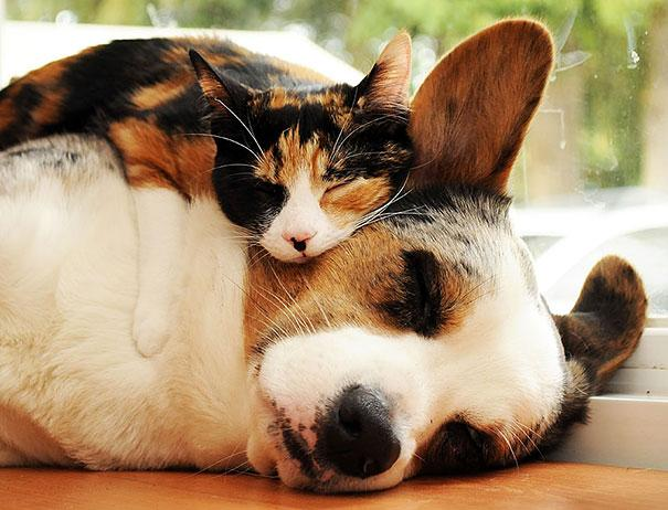 Photos 30 Animals Using Each Other As Pillows (1)