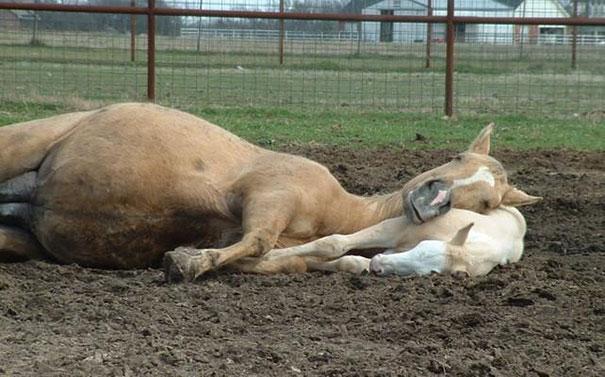 Photos 30 Animals Using Each Other As Pillows (10)