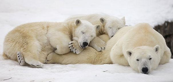 Photos 30 Animals Using Each Other As Pillows (12)