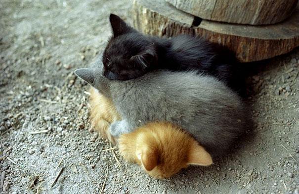 Photos 30 Animals Using Each Other As Pillows (13)