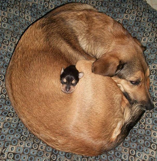 Photos 30 Animals Using Each Other As Pillows (14)