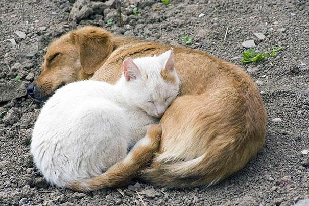 Photos 30 Animals Using Each Other As Pillows (15)
