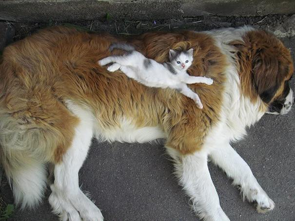 Photos 30 Animals Using Each Other As Pillows (2)
