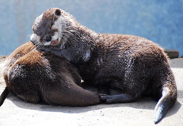 Photos 30 Animals Using Each Other As Pillows (20)