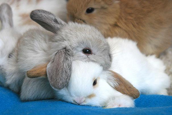 Photos 30 Animals Using Each Other As Pillows (22)