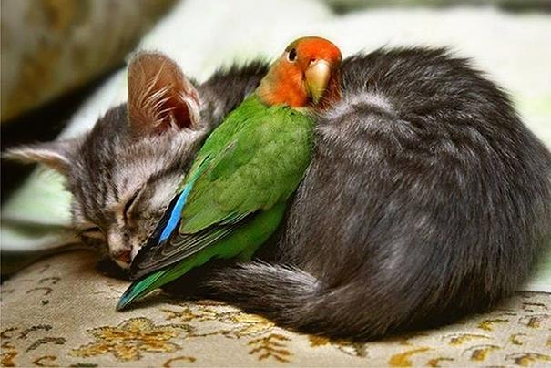 Photos 30 Animals Using Each Other As Pillows (3)