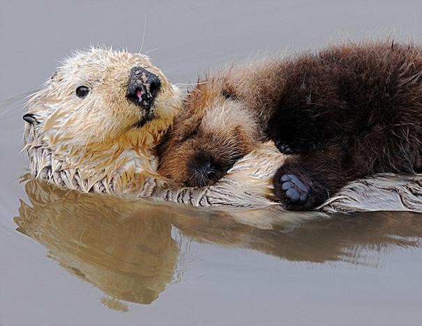 Photos 30 Animals Using Each Other As Pillows (4)