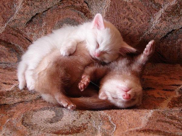Photos 30 Animals Using Each Other As Pillows (8)