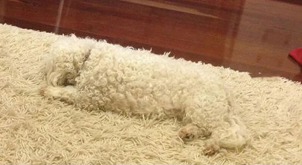 These Animals Have The Best disguise - Can You Spot Them 1