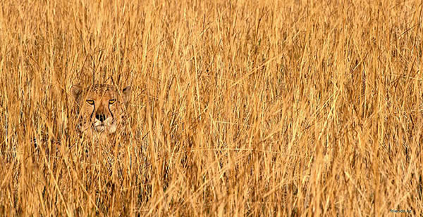 These Animals Have The Best Camouflage - Can You Spot Them 11