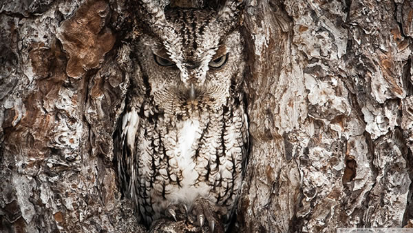 These Animals Have The Best disguise - Can You Spot Them 6