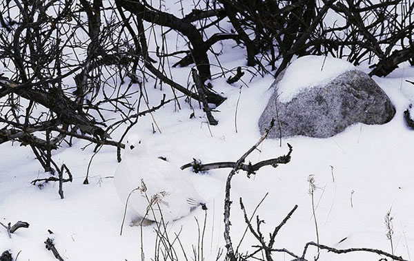 These Animals Have The Best Camouflage - Can You Spot Them 8