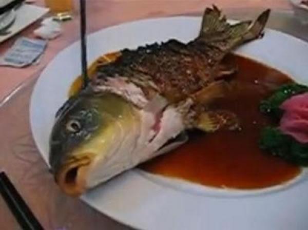 Ying-Yang Fish 6