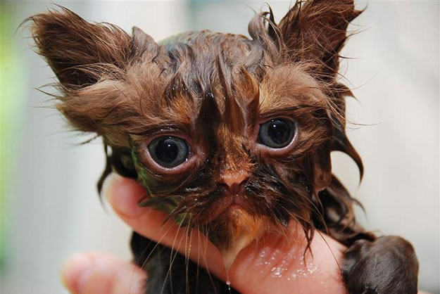 15 Wet Cat Grooming Photo Funnies 13
