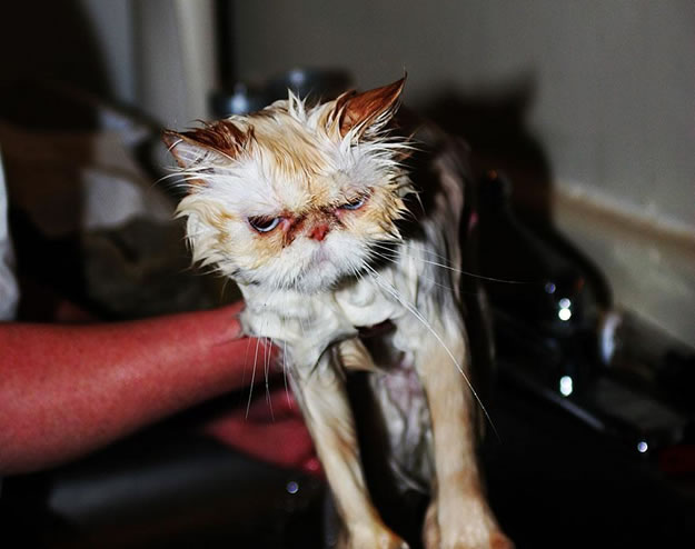 15 Wet Cat Photo Funnies 15