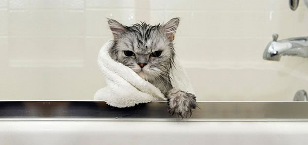 15 Wet Cat Photo Funnies 16