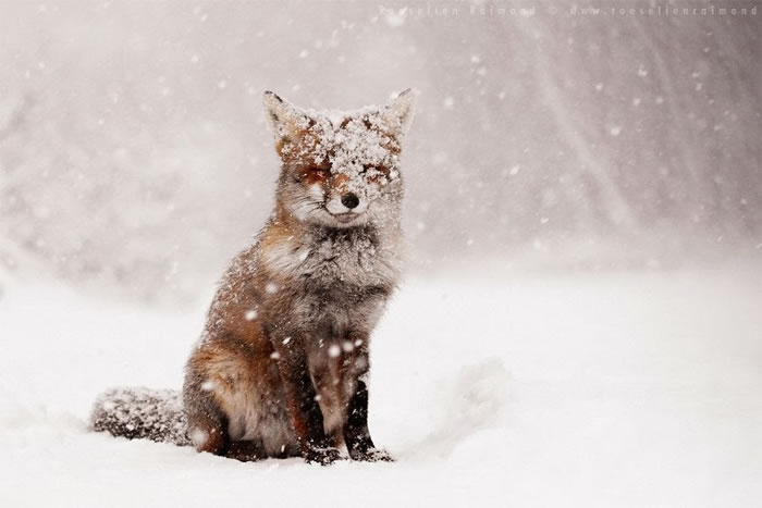 20 Amazing Wildlife Stock Photography Pictures By Roeselien Raimond 12
