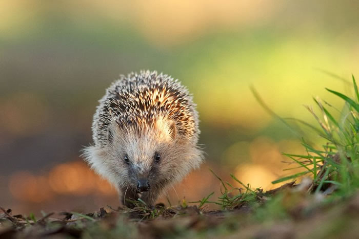 20 Amazing Wildlife Photography Pictures By Roeselien Raimond 17