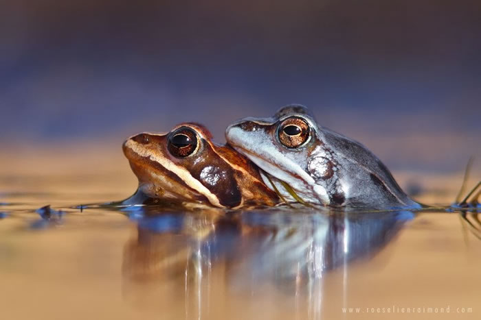 20 Amazing Wildlife Stock Photography Pictures By Roeselien Raimond 5