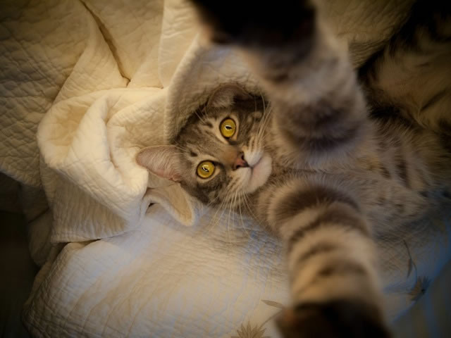 20 Funny Felines Taking Cat Selfies 1