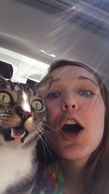 20 Funny Felines Taking Selfies 11