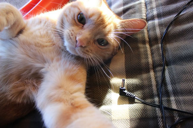 20 Funny Felines Taking Selfies 13
