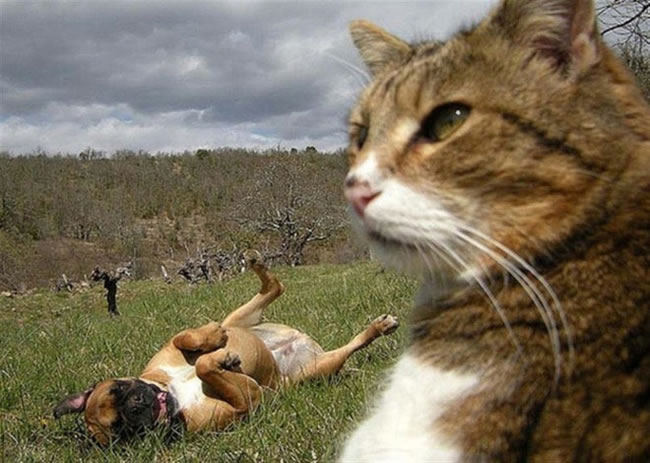 20 Funny Felines Taking Selfies 15