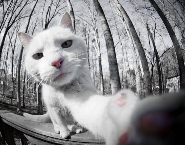 20 Funny Felines Taking Cat Selfies 16