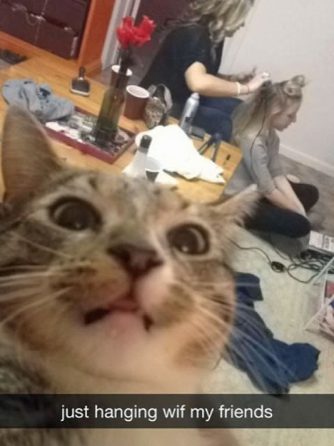 20 Funny Felines Taking Cat Selfies 2