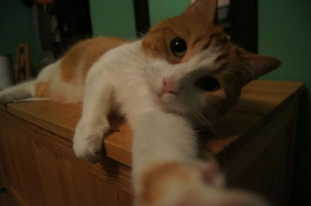 20 Funny Felines Taking Selfies 5