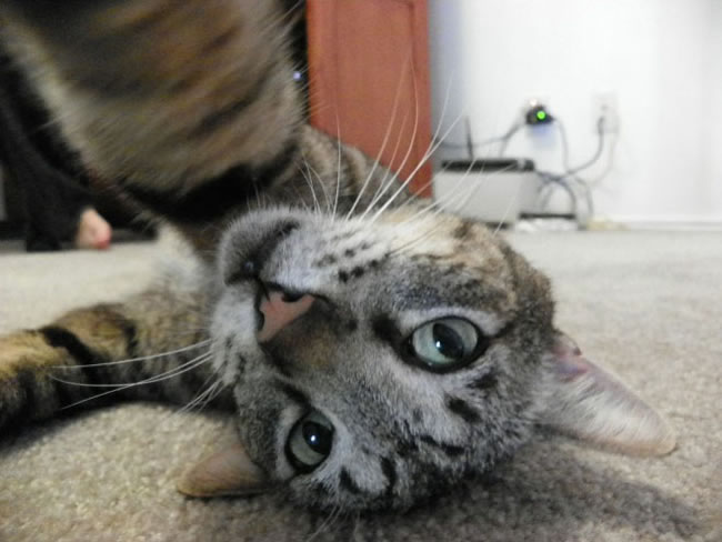 20 Funny Felines Taking Selfies 7