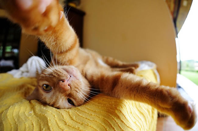 20 Funny Felines Taking Selfies 9